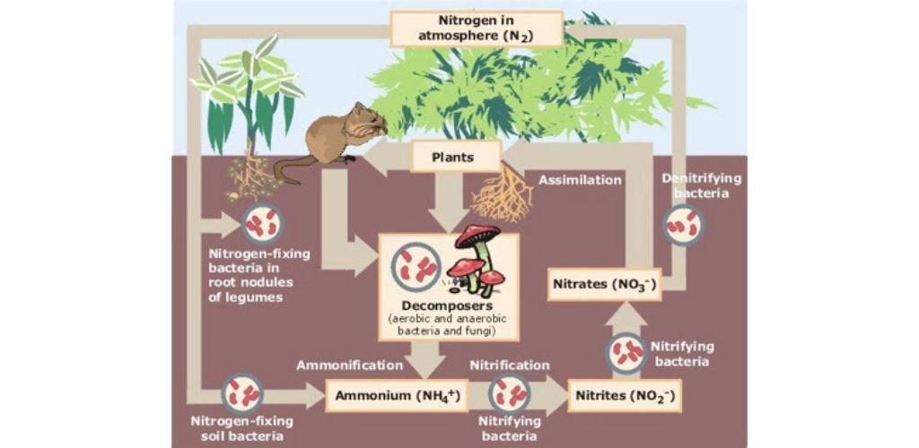 ecosystem schema